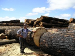 Douglas Fir Logs Salvaged from the 2002 Biscuit Fire